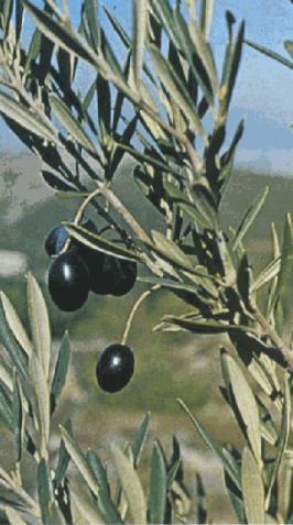 Ενέργειας των φυτών και των